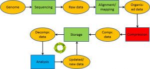 genome_lifecycle